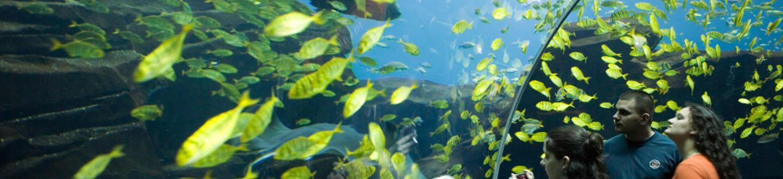 Atlanta Georgia Aquarium Tunnel Yellow Fish